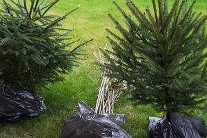 Dodávka a údržba rastlín